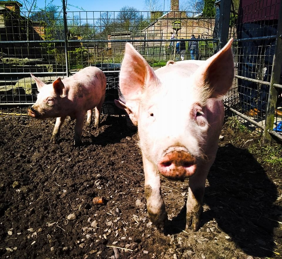 Where To Go In Manchester If You're An Animal Lover inside Garden House Petting Farm Marple