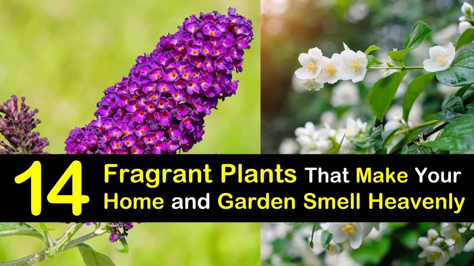 14 Fragrant Plants That Make Your Home And Garden Smell Heavenly intended for Garden Flowers That Smell Nice
