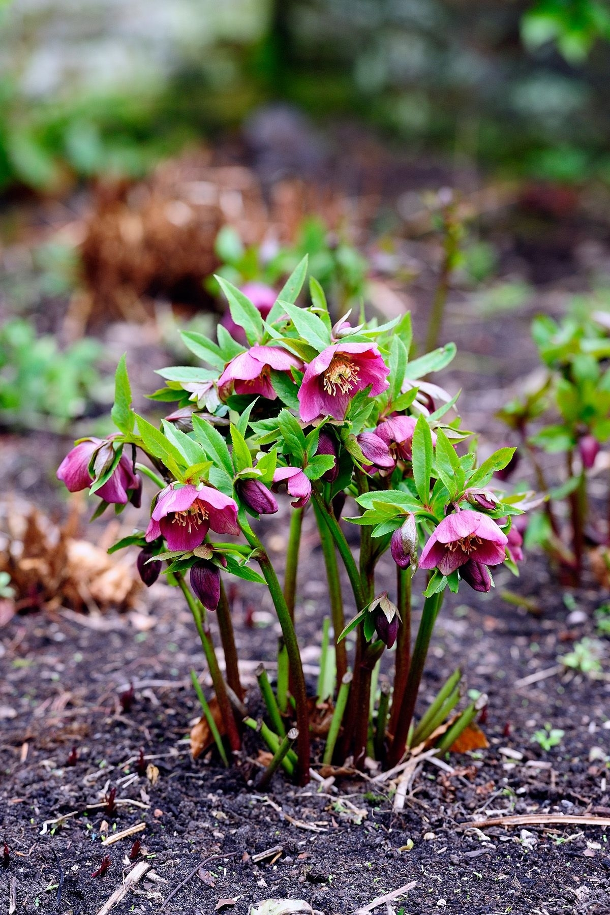15 Best Shade Perennials - Shade-Loving Perennial Flowers And Plants intended for Garden Flowers For Shaded Areas