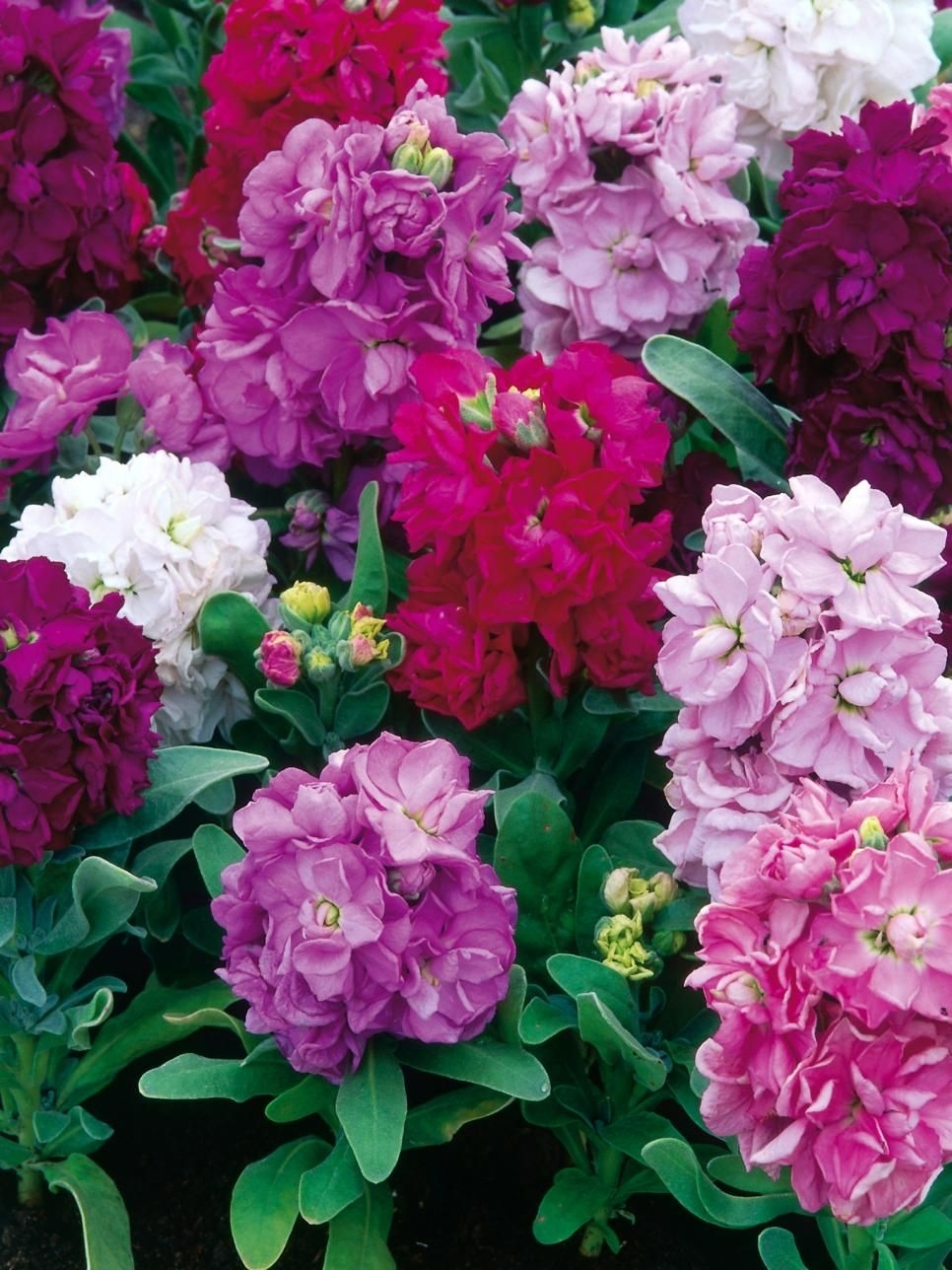 17 Annual Flowers For Year-Round Color | Year Round Flowers with regard to Garden Flowers All Year Round
