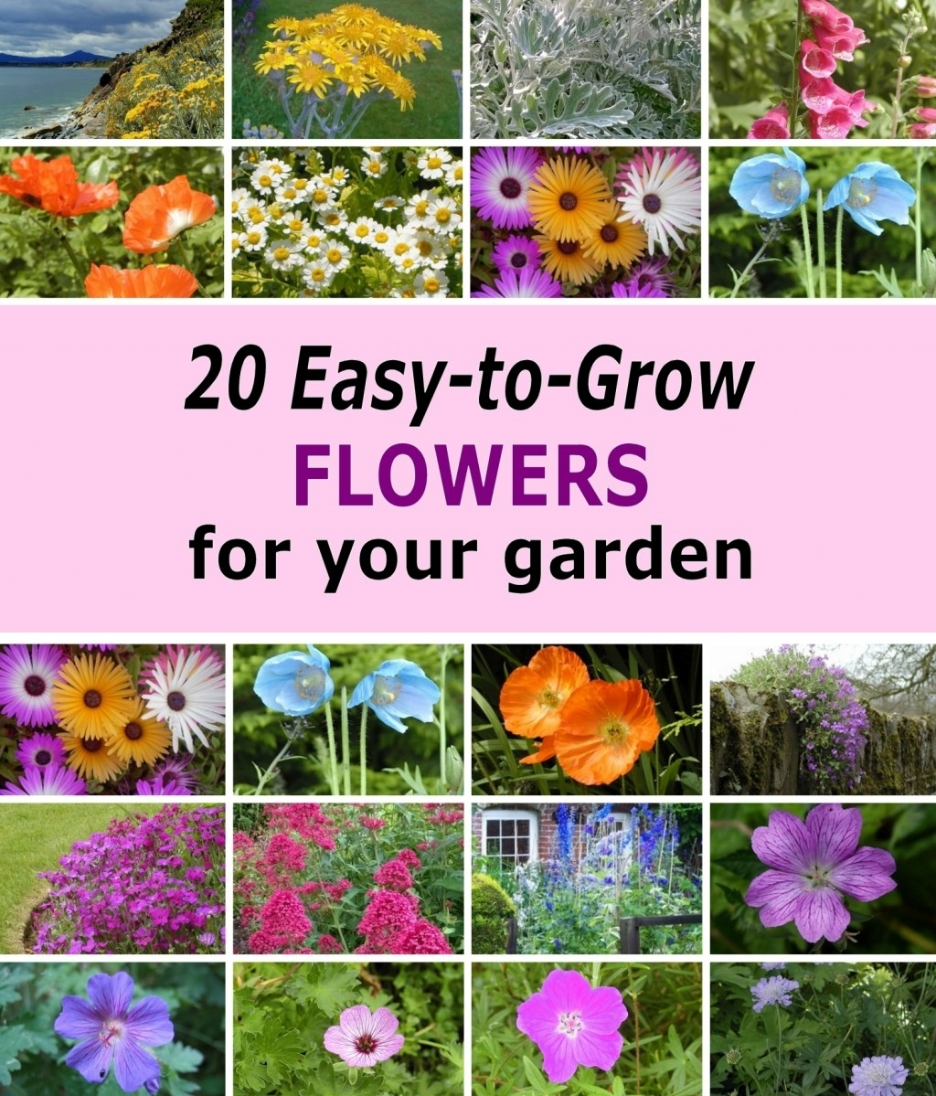 20 Easy-To-Grow Flowers For Garden Planters And Flower Beds! | Dengarden in Garden Flowers Easy To Grow