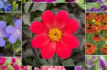 20 Super Easy Plants That Will Add Instant Colour To Your Garden with regard to Garden Flowers That Last A Year