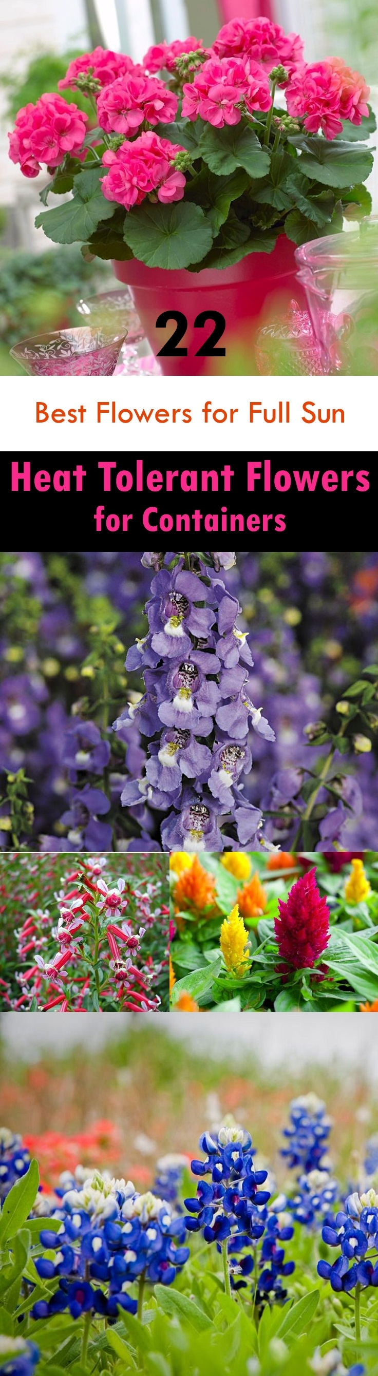 22 Best Flowers For Full Sun   Heat Tolerant Flowers For Containers throughout Garden Flowers That Like Full Sun