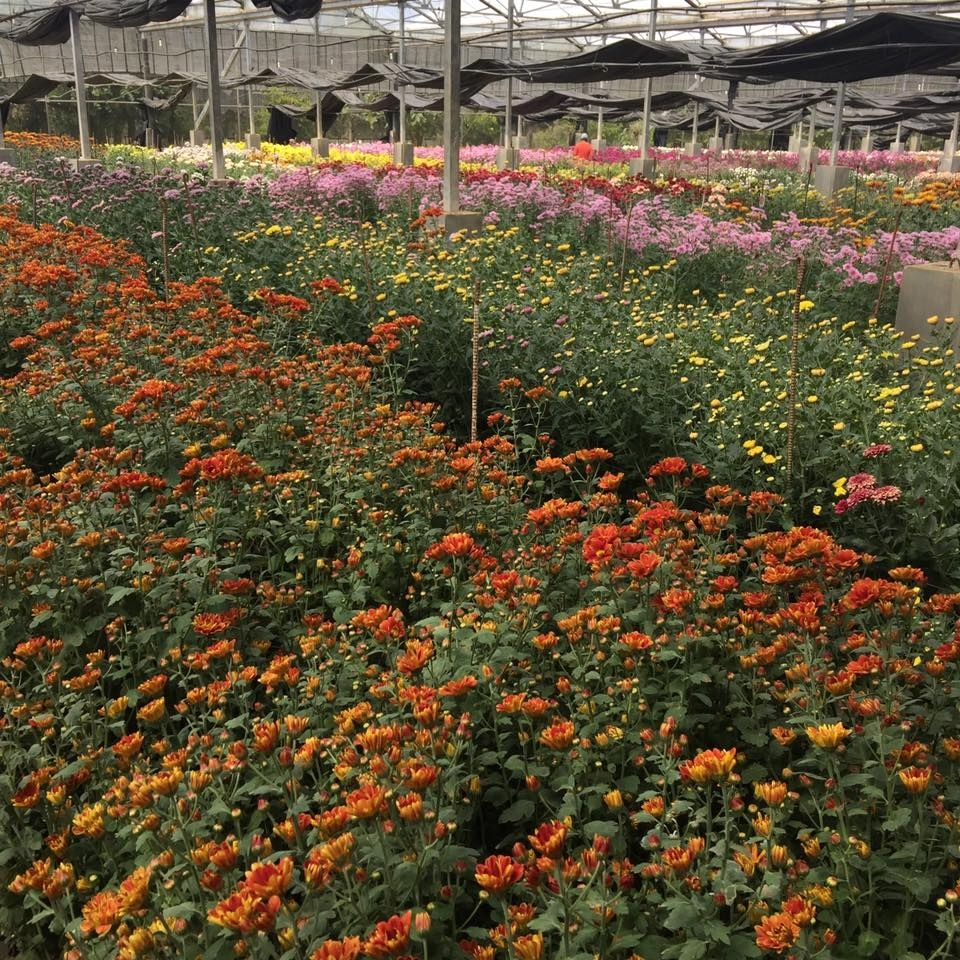 5 Beautiful Spots In The Philippines To Find Flowers - Choose for Garden Flowers In The Philippines