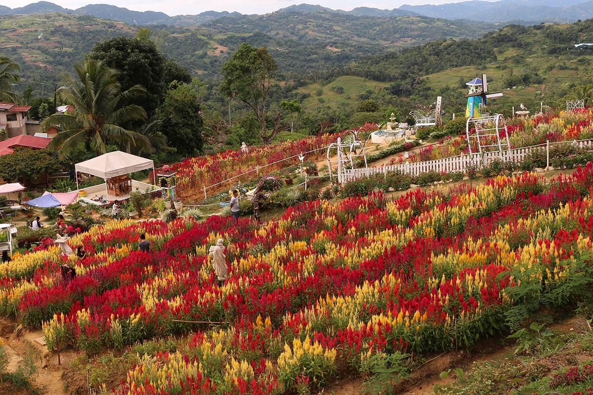 5 Beautiful Spots In The Philippines To Find Flowers - Choose intended for Garden Flowers In The Philippines