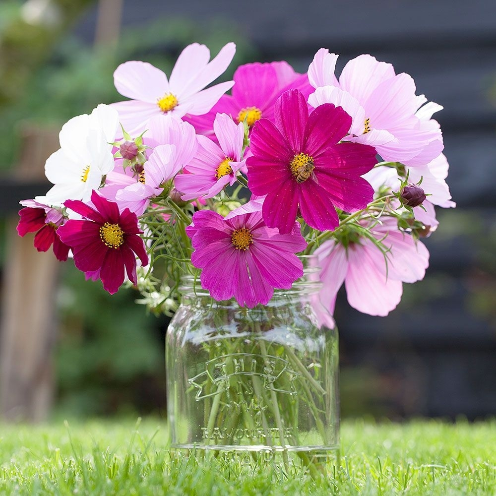 Annuals For Cutting   White Flower Farm inside Garden Flowers Suitable For Cutting