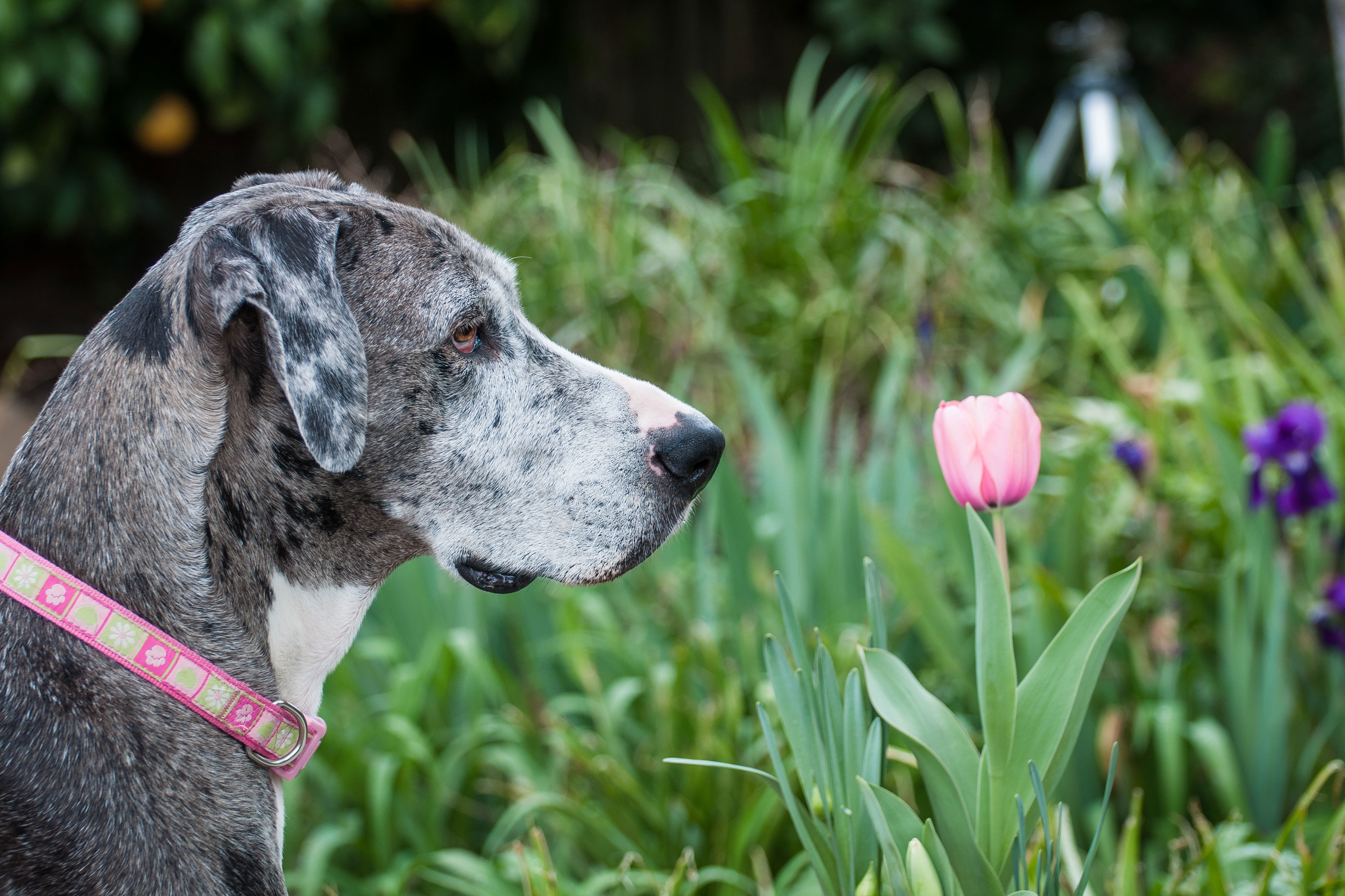 Best And Worst Flowers To Plant For A Pet-Friendly Garden - Southern inside Garden Flowers Not Poisonous To Dogs
