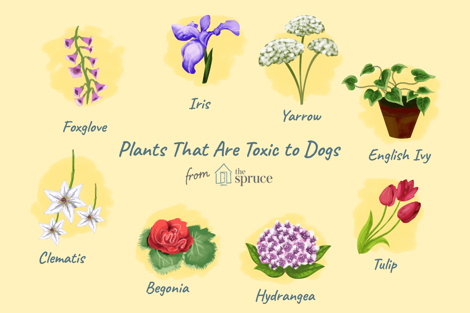 Common Backyard Plants That Are Poisonous To Dogs within Garden Flowers Toxic To Dogs