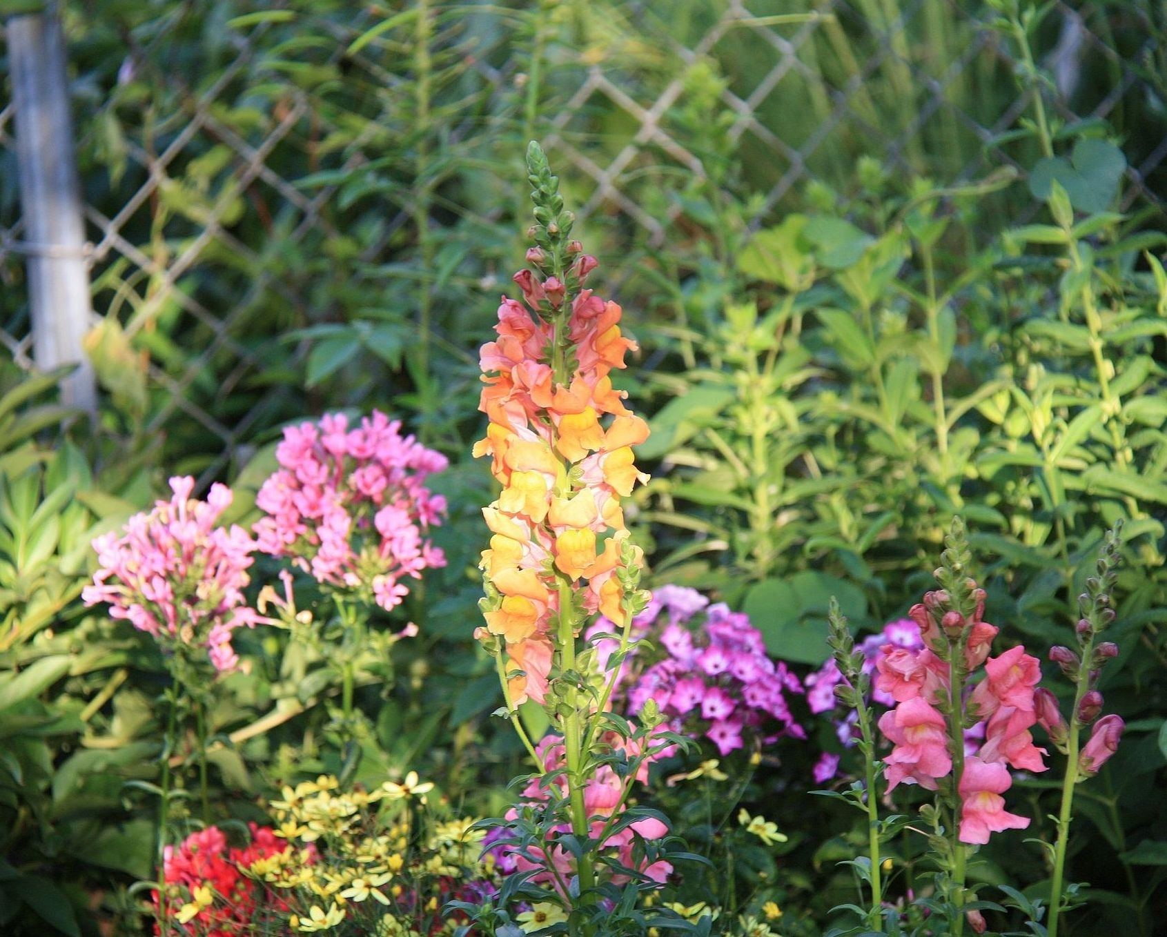 Design A Garden For Flowers All Summer Great Plant List   The Old in Garden Flowers That Last All Year
