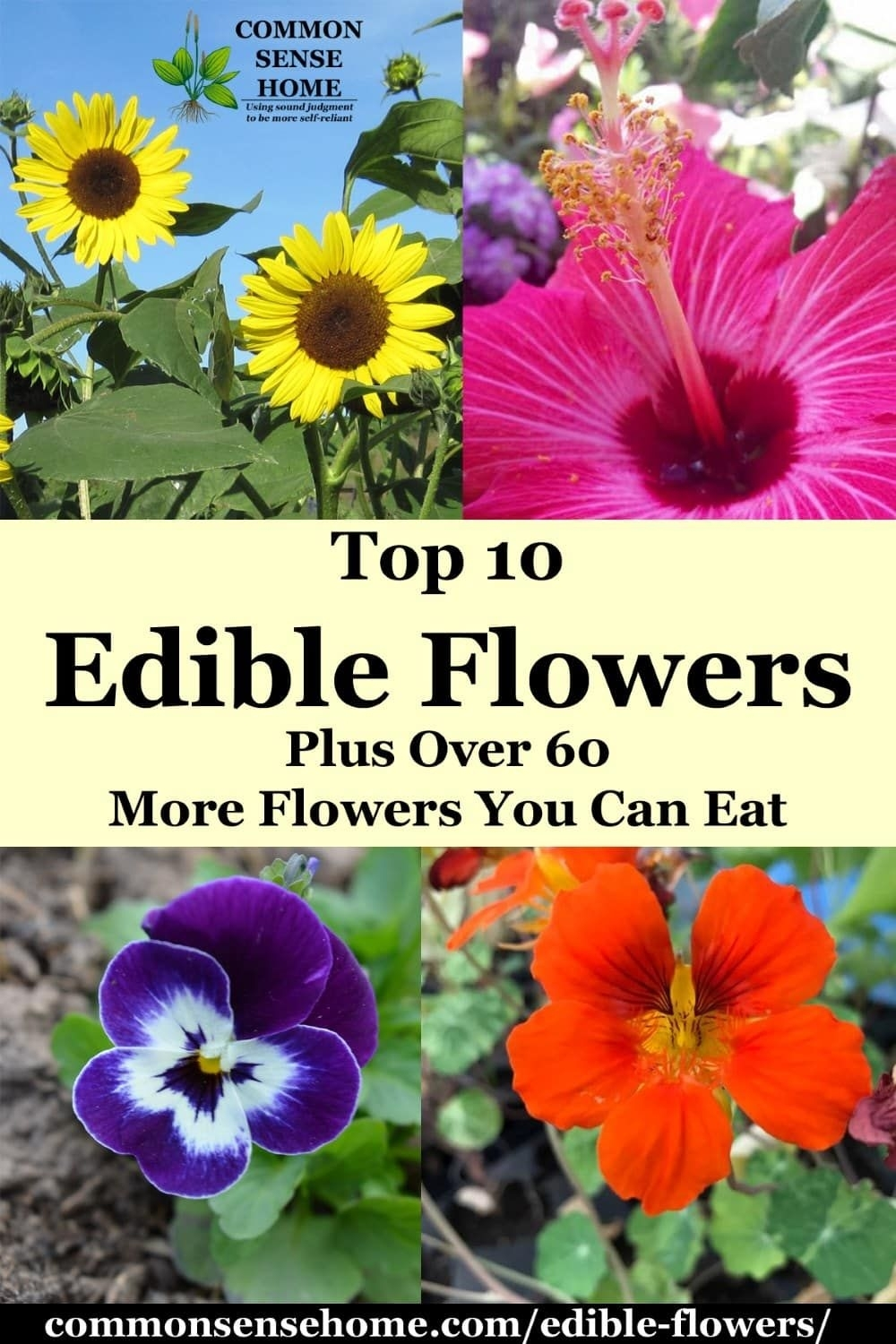 Edible Flowers List With Edible Flower Names And Pictures | Verde within Garden Flowers You Can Eat