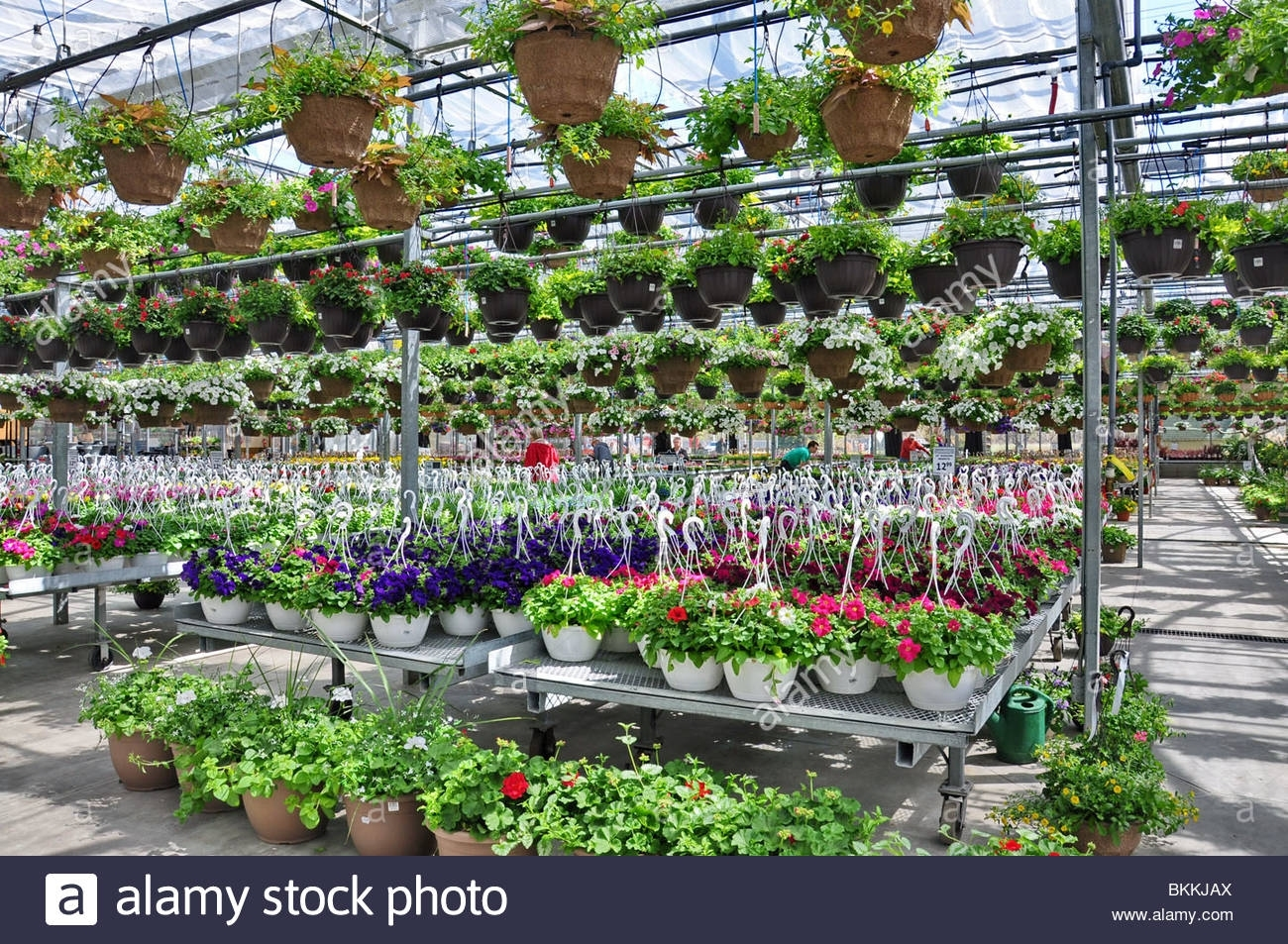 Flowers And Plants On Sale At A Garden Shop In Spring. Bradford with Garden Flowers For Sale Near Me
