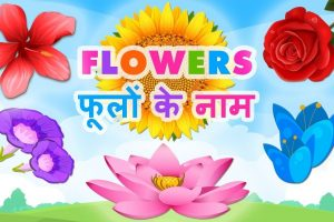 Flowers Name In Hindi | फूलों के नाम | Flowers Name In with Garden Flower Name In Hindi