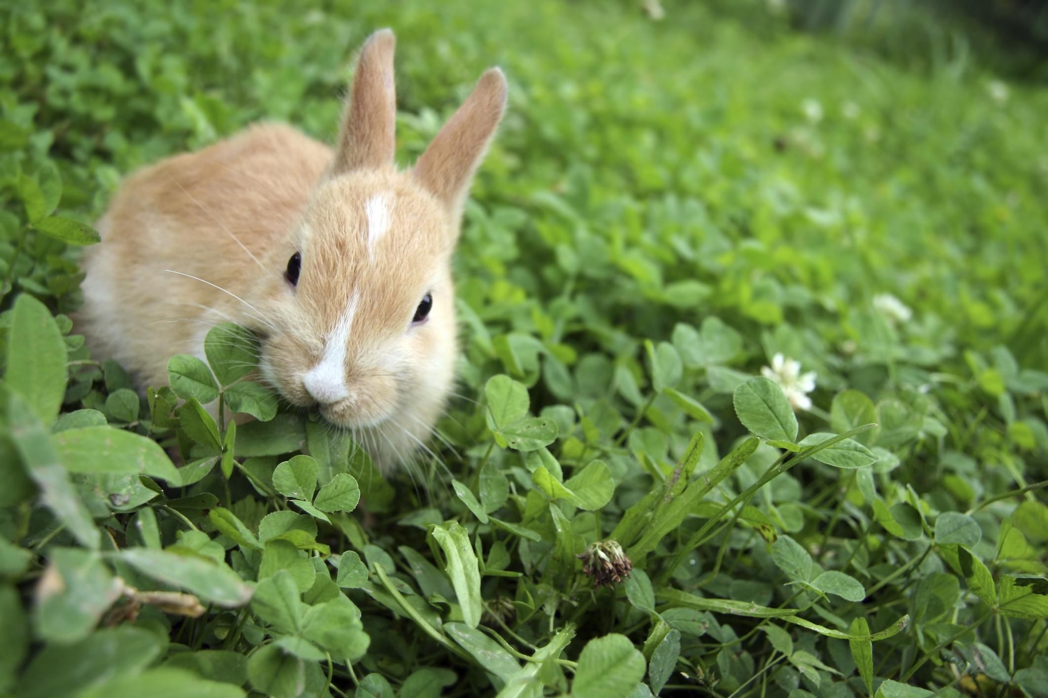 Garden Rabbit Control And Deterrent Tips regarding Garden Flower Dangerous To Rabbits