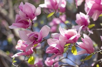 Gardening By Month - March pertaining to Garden Flowers To Plant In March
