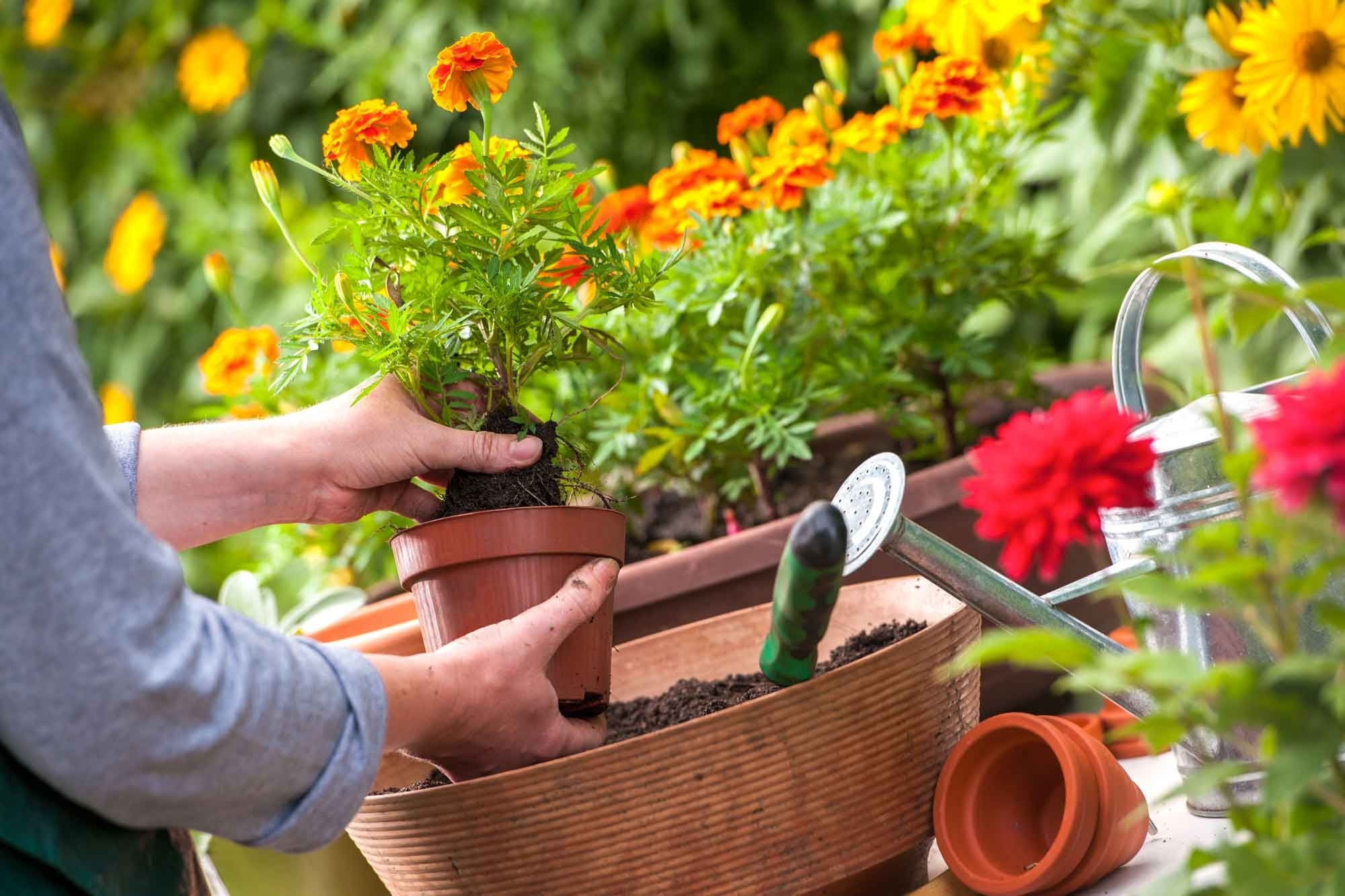 Gardening To Do Lists By Month For Houston regarding Garden Flowers To Plant In March