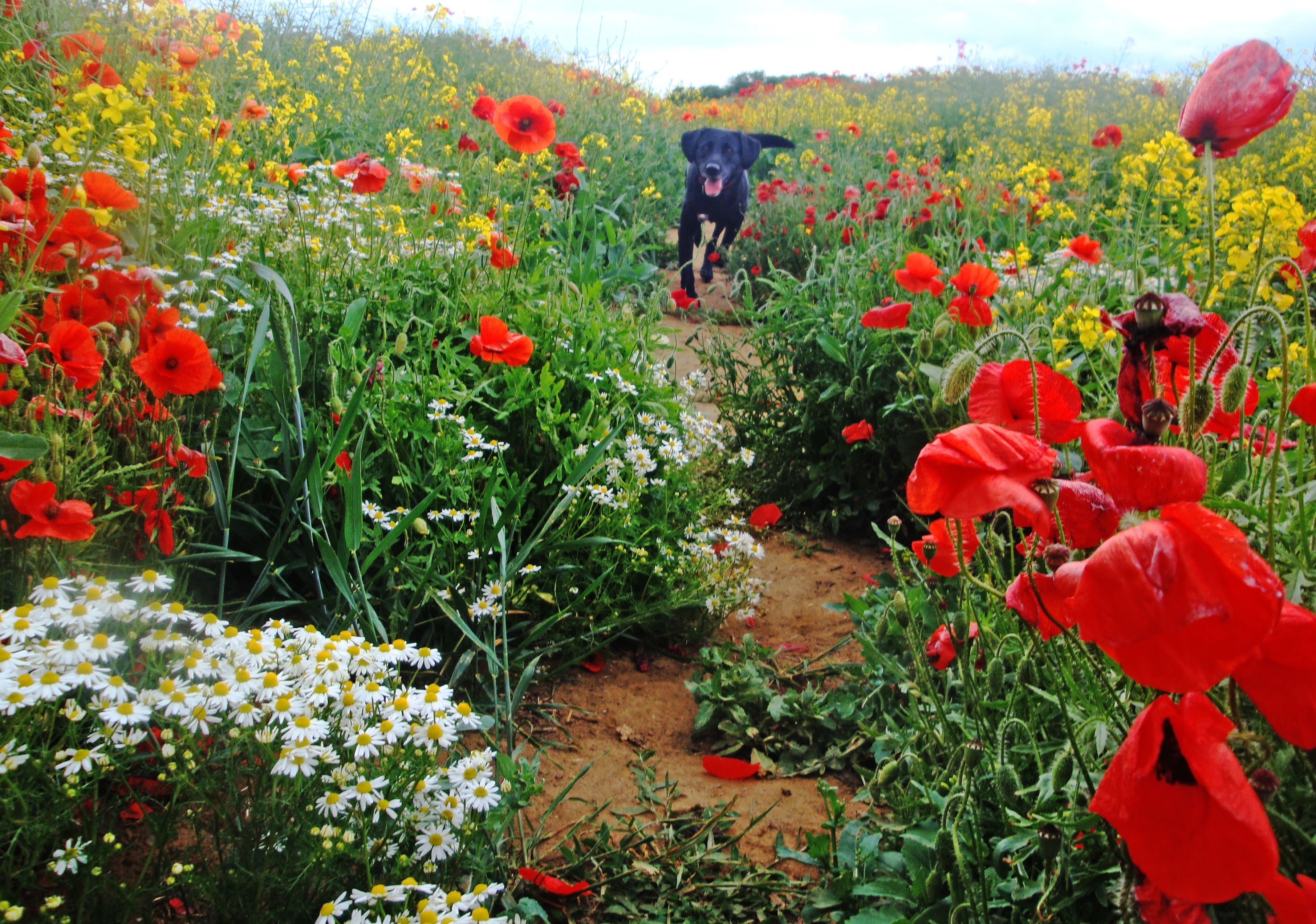 House And Garden Plants Poisonous To Dogs with regard to Garden Flowers Toxic To Dogs