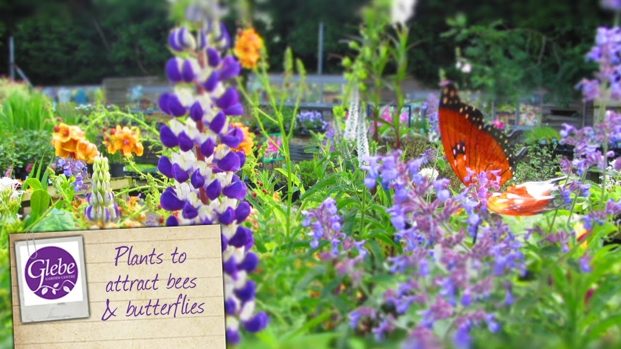 How To Attract Bees & Butterflies To Your Garden - Youtube with Garden Flowers For Bees And Butterflies