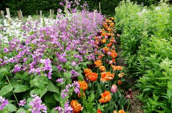 Inspiration: Sarah Raven's Cutting Garden Flowers In Rows regarding Garden Flowers Good For Cutting