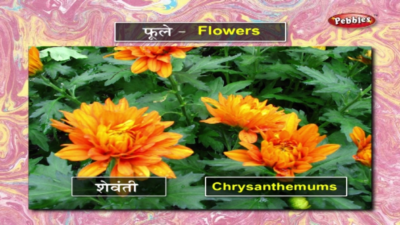 Learn Flowers In Marathi | मराठी शिकूया | Learn Marathi pertaining to Garden Flower Name In Marathi
