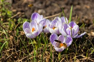 March Gardening Jobs - Gardening To Do List For March within Garden Flowers To Plant In March