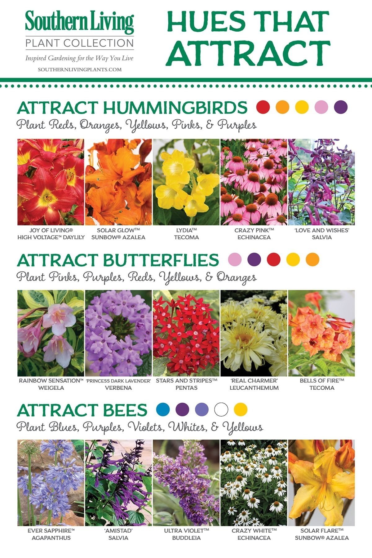 Natural Attraction | Health And Garden | Hummingbird Garden, Garden for Garden Flowers For Bees And Butterflies