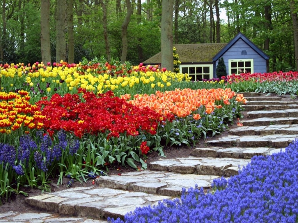 Park Flower Garden Near Me — Outdoor Ideas : Disadvantages Of intended for Garden Flowers On Sale Near Me
