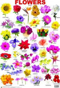Pin By Daimi Villanueva On Patrón De Flores | Different Types Of inside Garden Flowers Name In Hindi