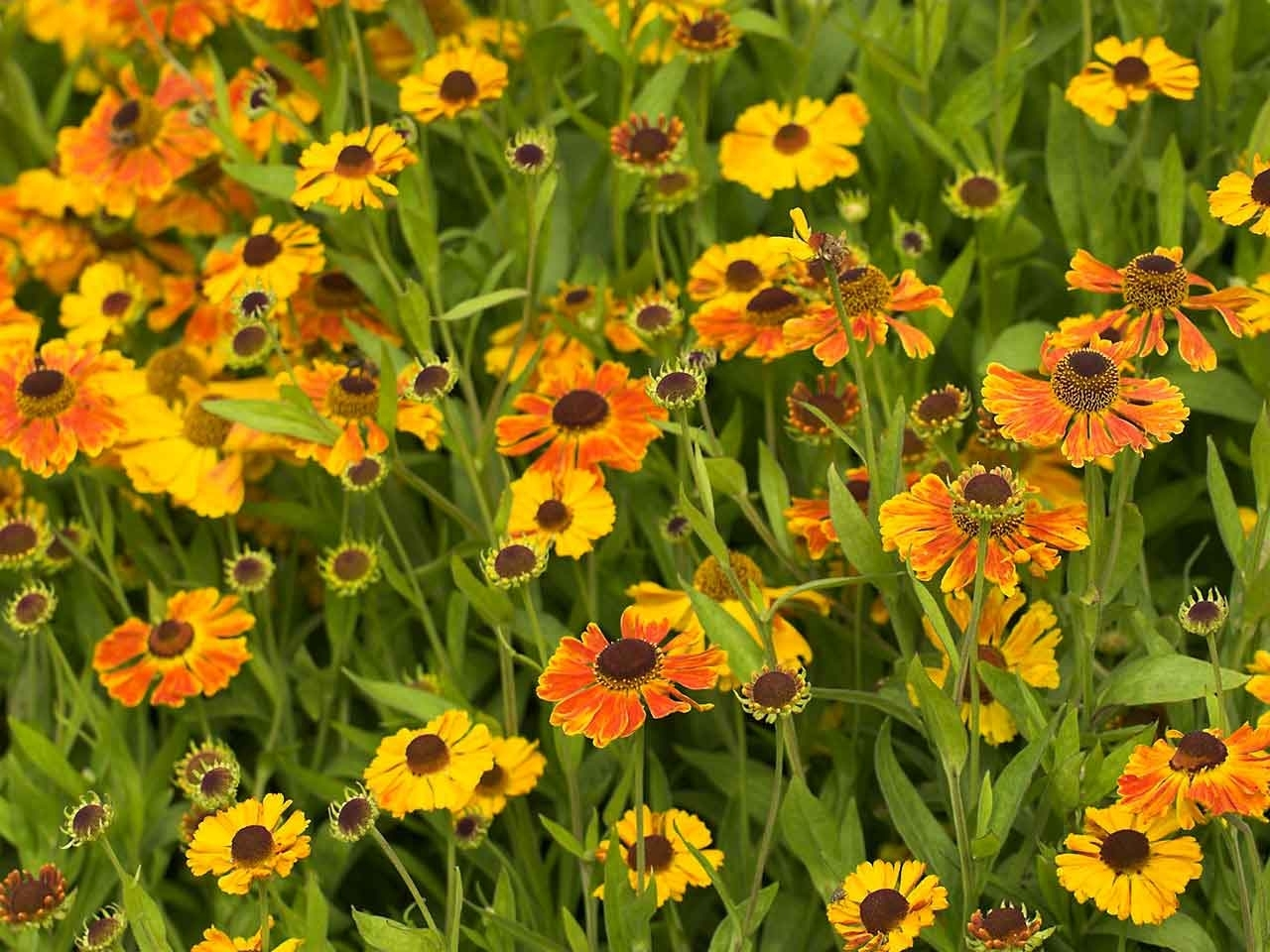 Plants That Are At Their Best In August - Saga in Garden Flowers For July And August