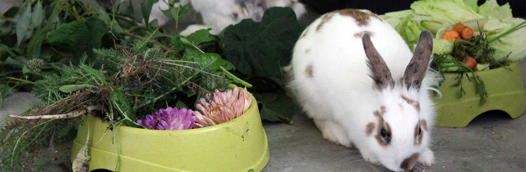 Poisonous Plants – Rabbit Welfare Association & Fund (Rwaf) pertaining to Garden Flowers Harmful To Rabbits