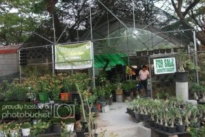 Quezon Memorial Circle Plant Center | Collector's Connection for Flower Garden Quezon Memorial Circle