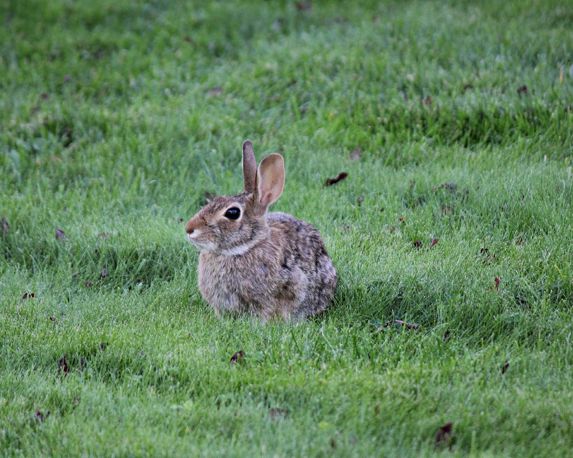 Rabbits: How To Identify And Get Rid Of Rabbits | Garden Pest with Garden Flowers Safe For Rabbits