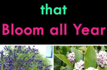 Shrubs That Bloom All Year   Year Round Shrubs According To Season within Garden Flowers That Last All Year