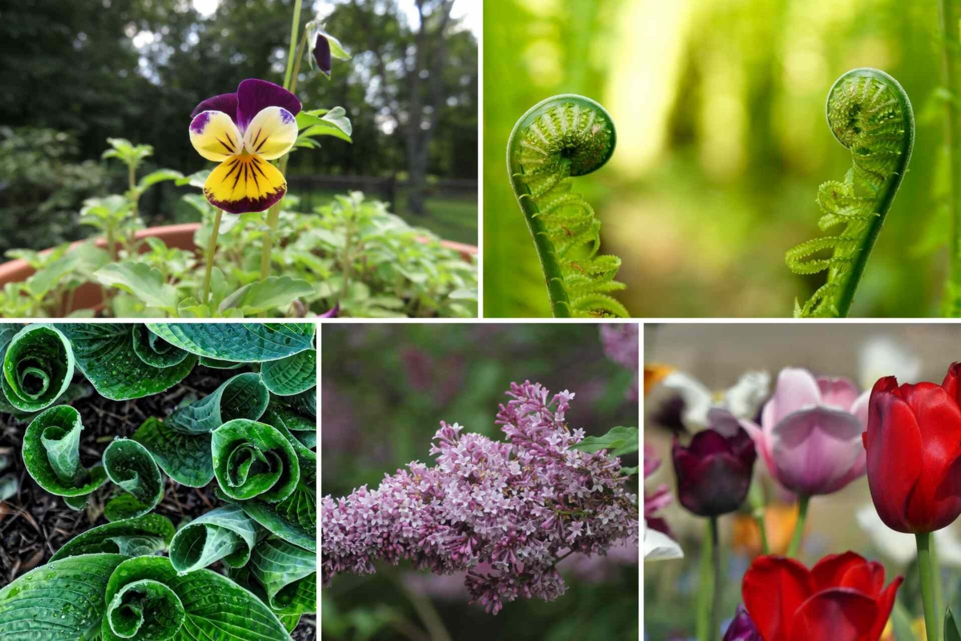 Six Ornamental Plants & Flowers That You Can Eat! • Walkerland inside Garden Flowers You Can Eat