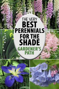The Best Flowering Perennials For The Shade   Gardener's Path with Garden Flowers For Shaded Areas