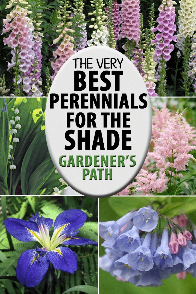 The Best Flowering Perennials For The Shade | Gardener's Path with Garden Flowers For Shaded Areas
