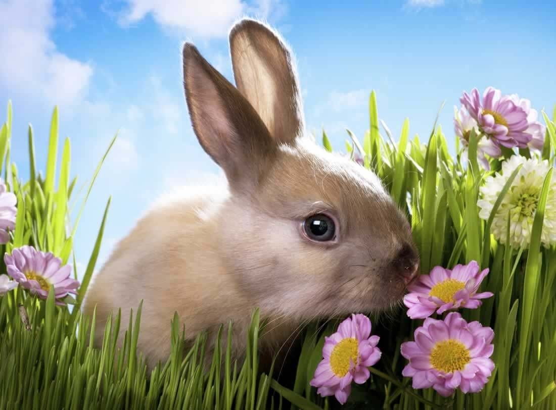 These 15 Foods Could Harm Or Kill Your Rabbit | Peta inside Garden Flowers Harmful To Rabbits