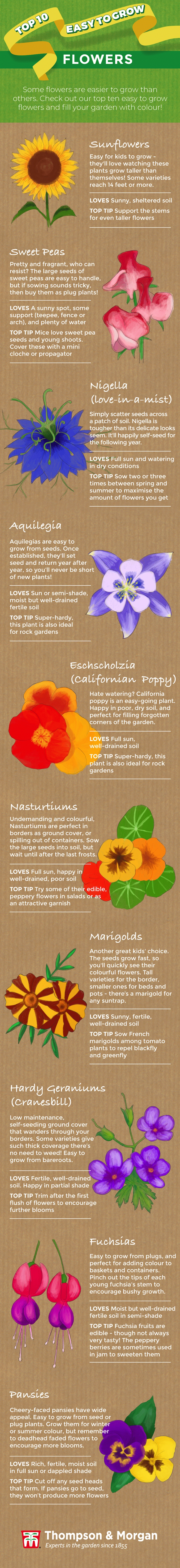Top 10 Easy To Grow Flower Plants And Seeds For Beginners for Garden Flowers Easy To Grow