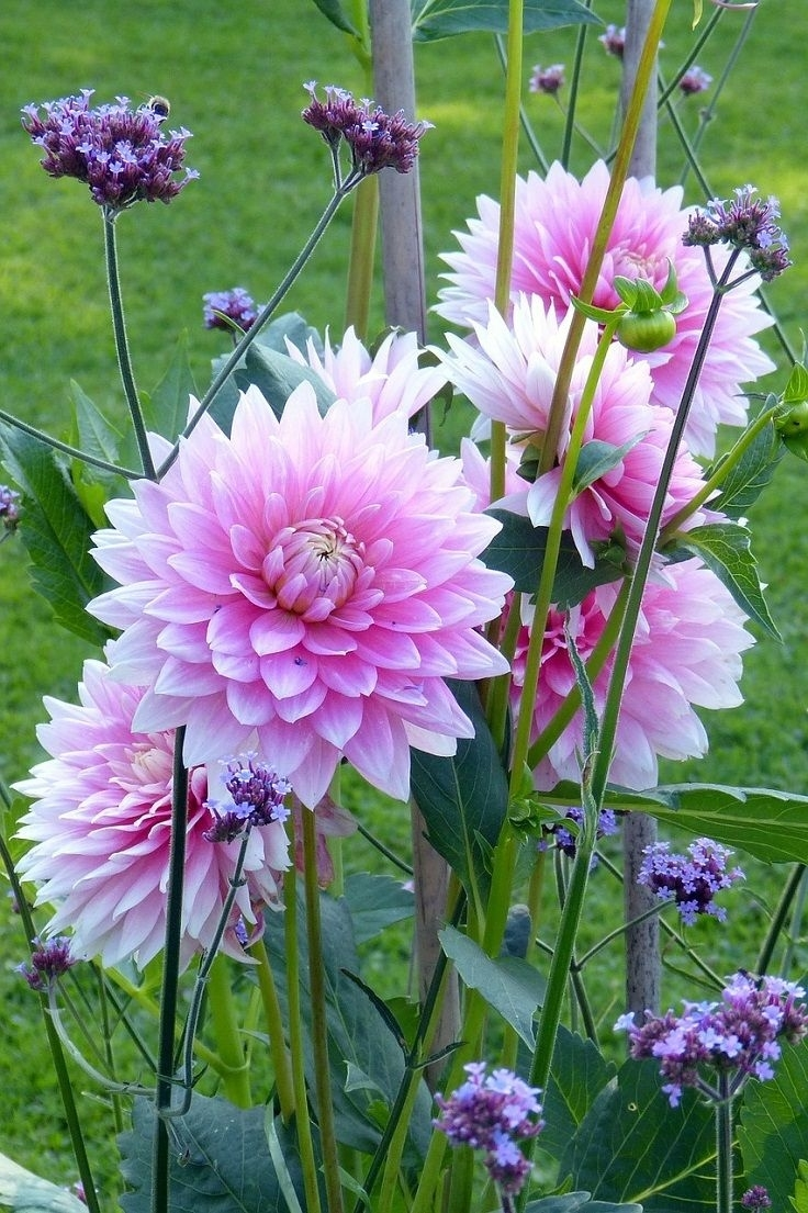 Top 10 Plants And Bulbs For Planting In Spring   Gardening regarding Garden Flowers To Plant Now