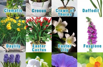 Toxic Plants For Pets | Pethealthcare.co.zatoxic Plants For Pets with regard to Garden Flowers Safe For Cats