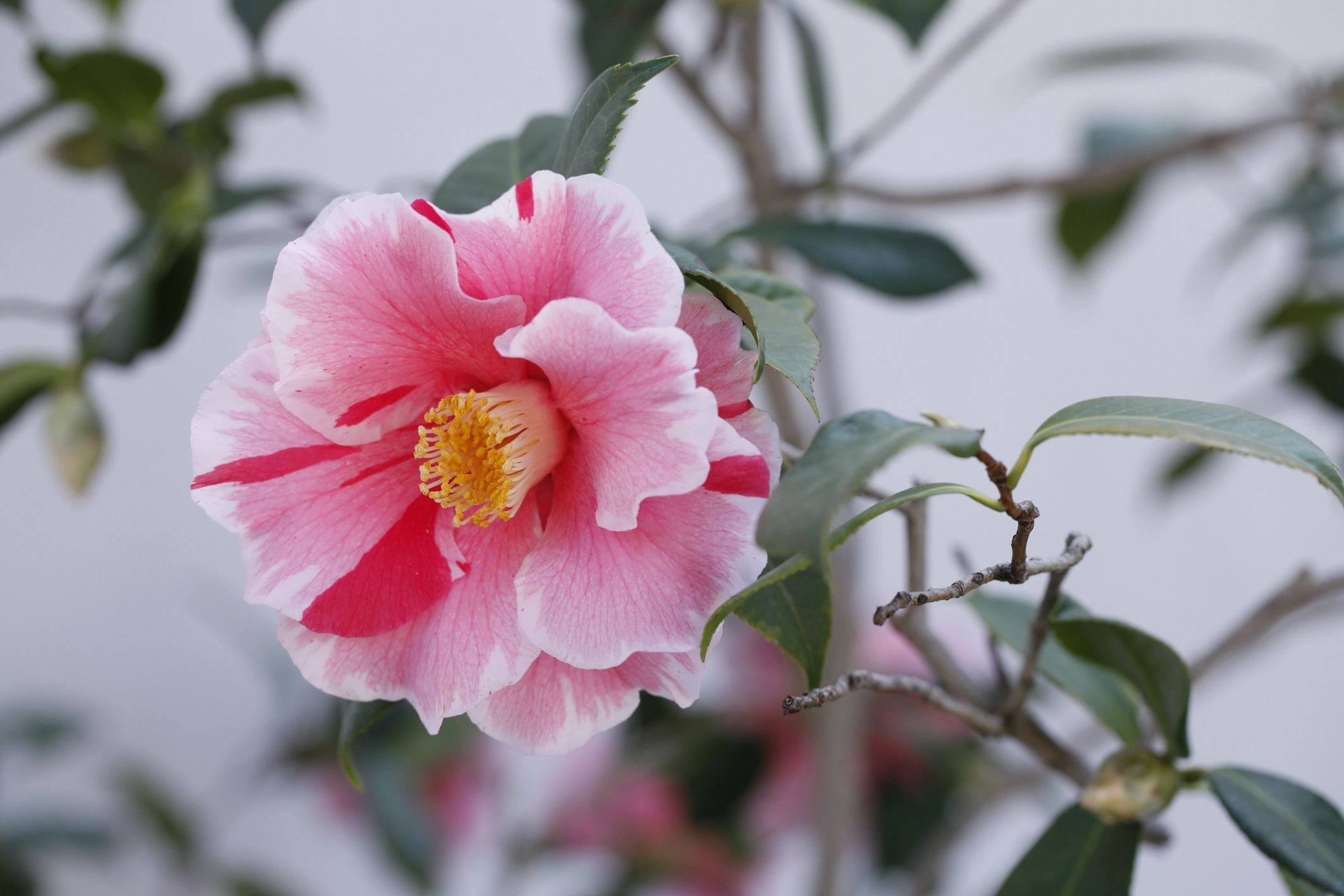 9 Traditional Japanese Plants For Your Garden within Zen Garden Plants Zone 5