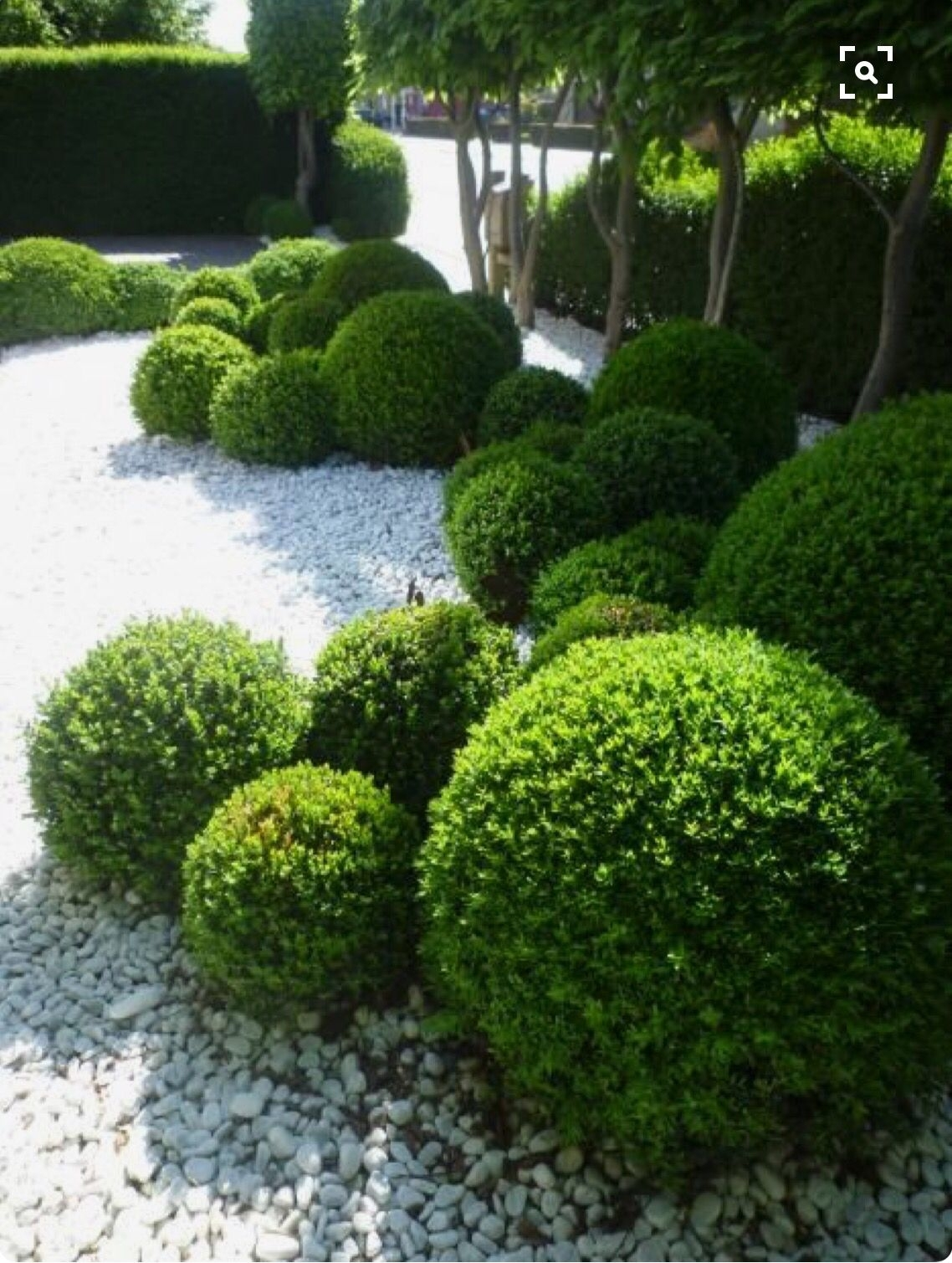 Balls Of Topiary In A Modern Minimalist Garden Design | Landscaping for Zen Garden Design Balls
