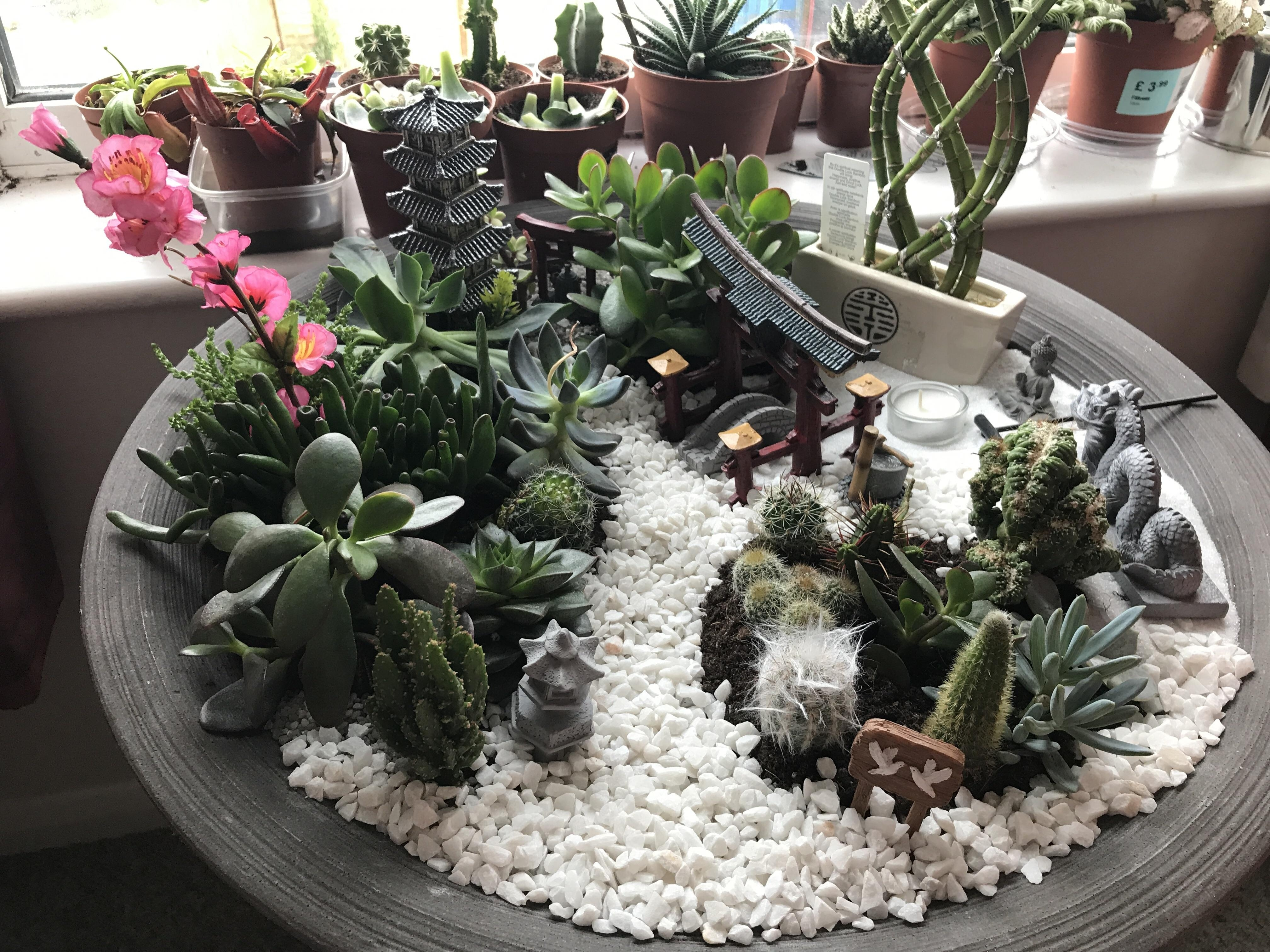 My Mini Japanese Style Garden But Made With Succulents And Cacti throughout Zen Garden Plant Pots