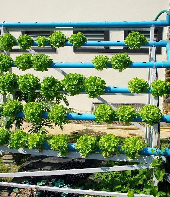 Can Hydroponic Gardens Be Outside
