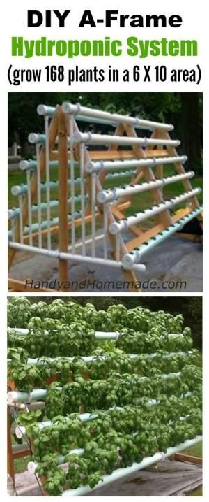 How To Grow Hydroponic Garden