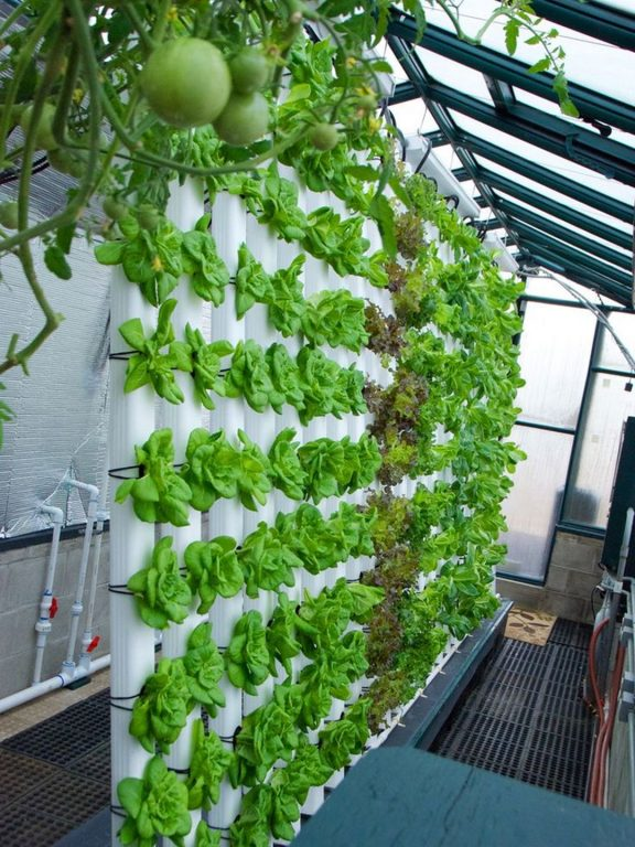 Hydroponic Gardening In Your Home