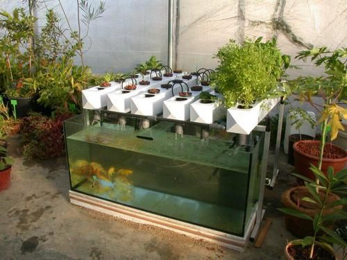 Hydroponic Gardening Systems With Fish