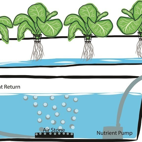 Hydroponic Growing For Plants