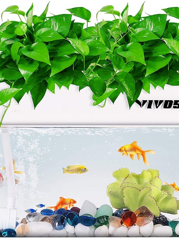 Hydroponic Plants With Fish