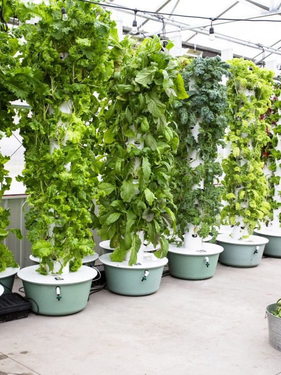 Hydroponic Tower Best Plants