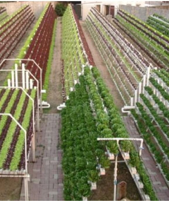 Large Scale Hydroponic Garden